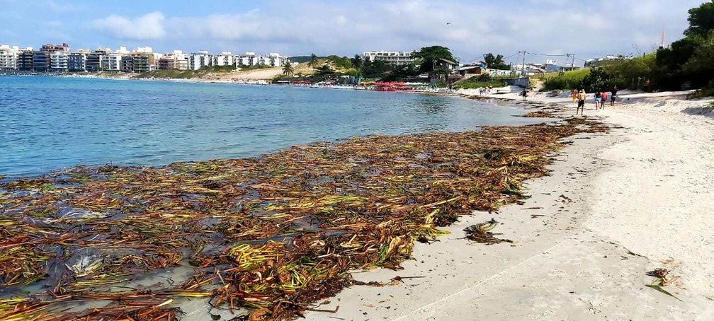 Parte da faixa de areia de praias de Cabo Frio ficou tomada por uma grande quantidade de plantas  — Foto: Divulgação/Prefeitura de Cabo Frio