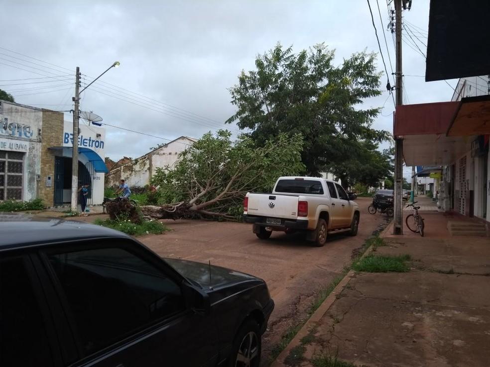 Árvores caíram em vários lugares da cidade (Foto: Lena Mendonça/Rádio CBN)