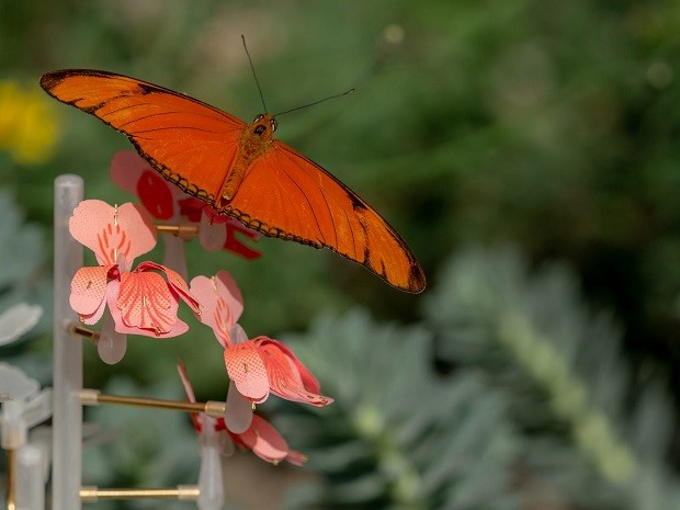 Designer holandesa cria flores artificiais para alimentar insetos polinizadores (Foto: Divulgação)