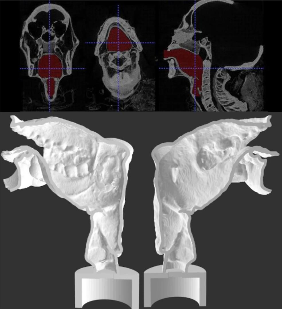 Vista da imagem feitas a partir de tomografias e da reprodução do trato vocal da múmia Nesyamun — Foto: Reprodução Nature