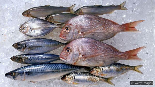 Os riscos e benefícios à saúde do consumo de peixe