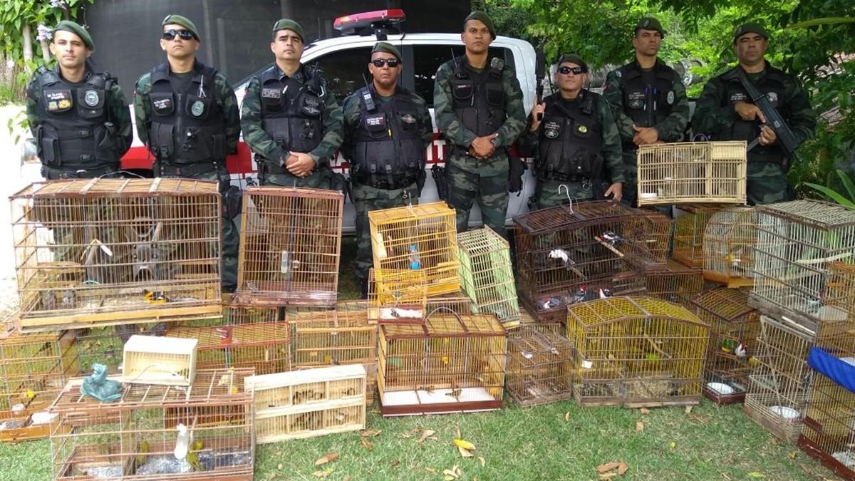 PM apreende 80 aves silvestres e prende sete pessoas em Pedras de Fogo, PB