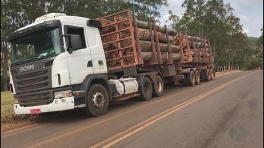 Ciclista de 21 anos morre ao bater na traseira de caminhão em Santo Antônio da Alegria, SP