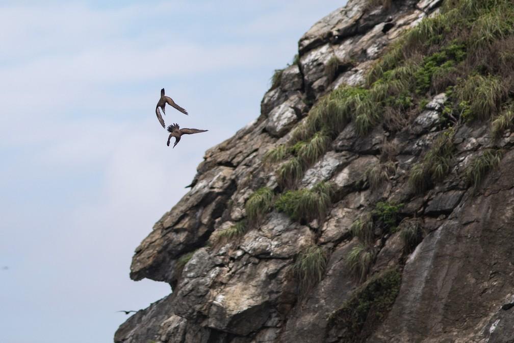 Pássaros brincam voando juntos sobre uma ilha secundária da Praia do Leão, em Noronha — Foto: Fábio Tito/G1