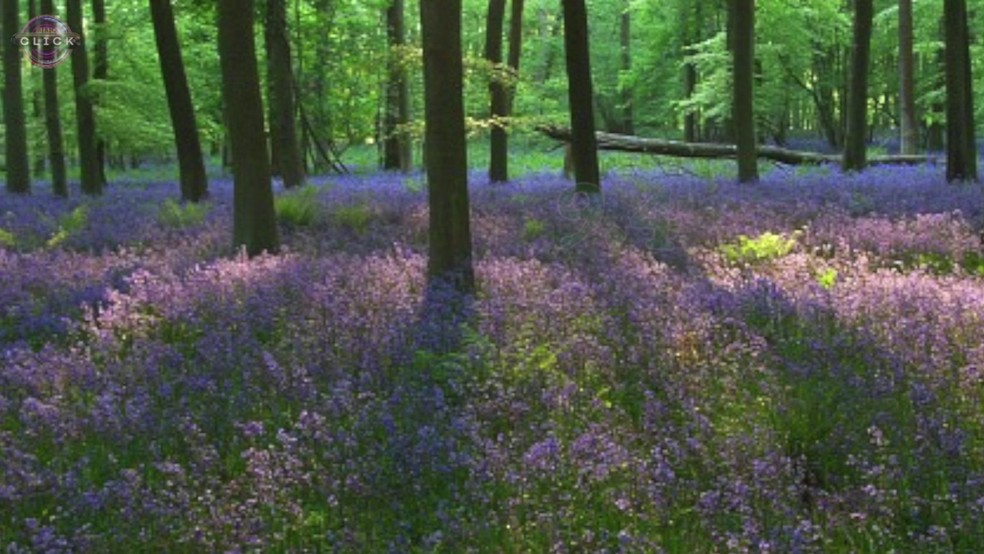 Cientistas desenvolveram algoritmo que dá nota de 'beleza' para lugares (Foto: BBC)