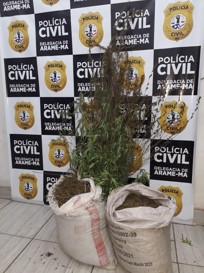 Polícia apreende pés de maconha e prende cinco pessoas suspeitas de tráfico de drogas no MA