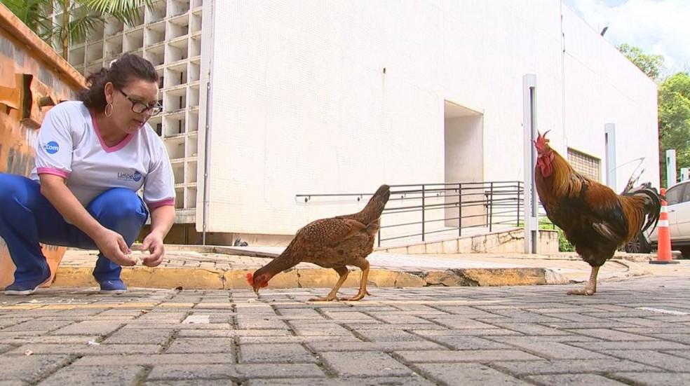 Aves se adaptaram à rotina do prédio e chegam a ser alimentadas por funcionários (Foto: Reprodução/TV TEM)