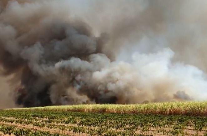 Canavial pega fogo às margens de rodovia em Jeriquara, SP; vídeo mostra área atingida