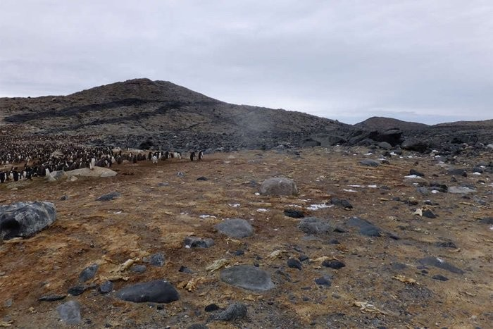 Havia de 10 a 15 carcaças de pinguins por metro quadrado no local (Foto: Gao et al)