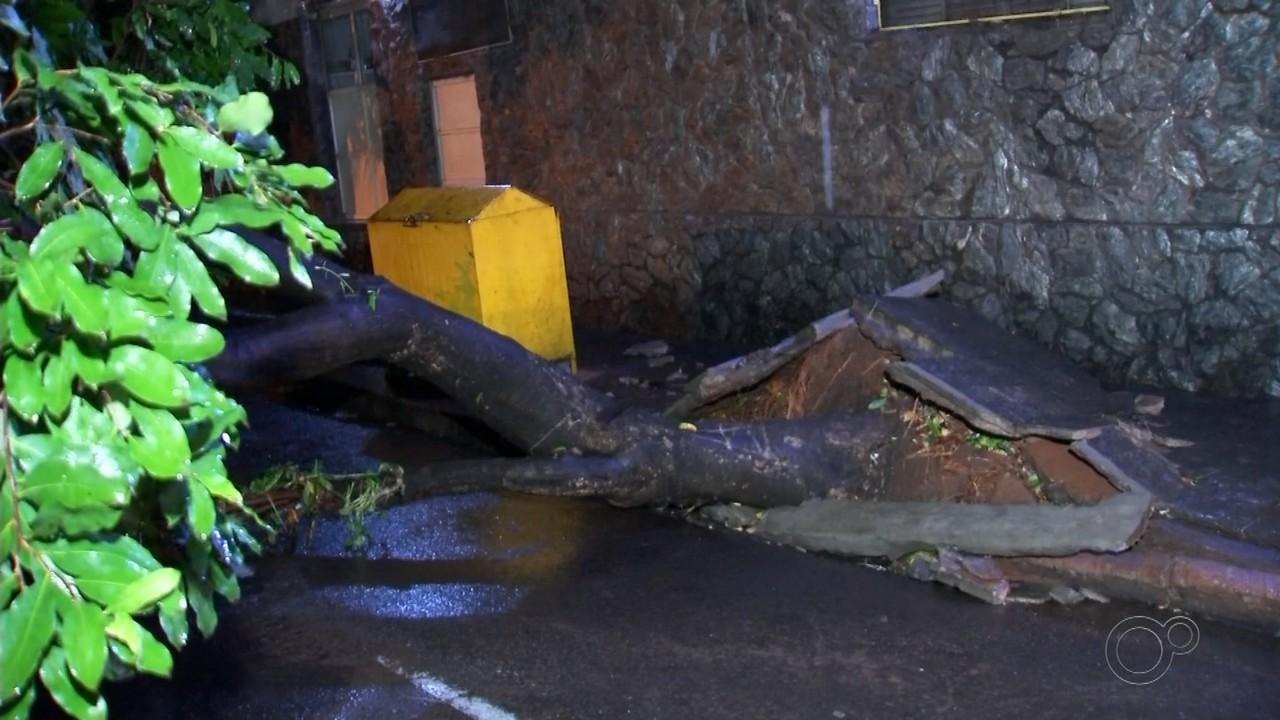 Chuva forte provoca queda de árvore, desabamento de muros e alagamentos em Birigui