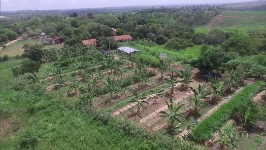 Sistema agroflorestal cultiva a terra recuperando áreas degradadas em Glória do Goitá