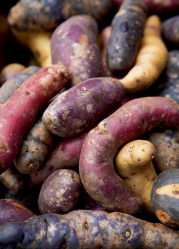 Lifestyle viagem Chile - Variedade de batata chilote (Foto: Carol Gherardi )
