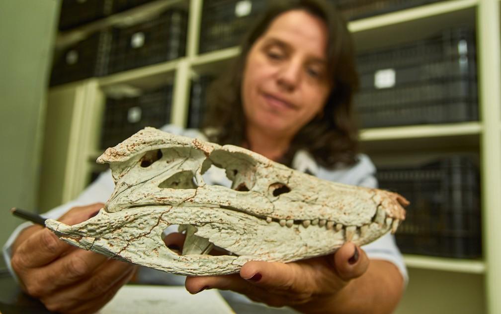 bae0c58c934 ... mostra crânio A diretora do Museu de Paleontologia de Monte Alto