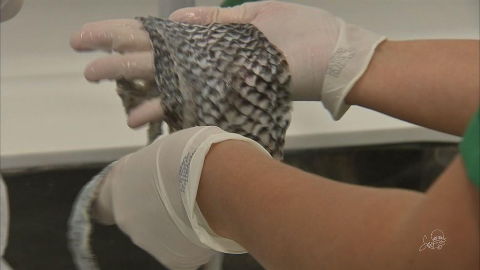 Pele de peixe é usada em tratamentos no Ceará — Foto: TV Verdes Mares