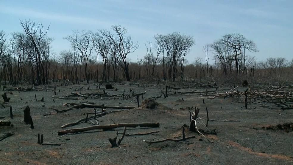 Área atingida por incêndio em São Raimundo Nonato, Sul do Piauí — Foto: Reprodução/TV Clube