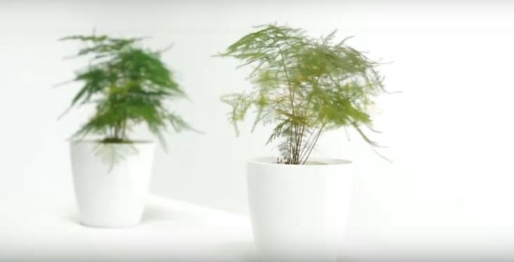Plantas ganham tecnologia para fazer até transmissões ao vivo (Foto: Reprodução/Youtube)