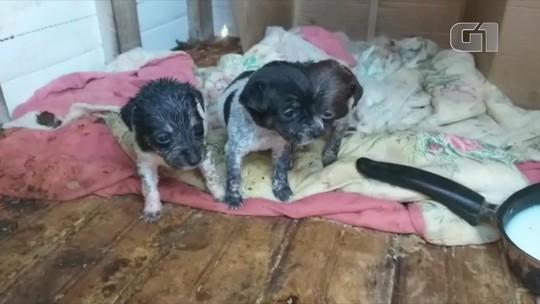 Imagem mostra desespero de filhotes tentando mamar em cadela morta e causa revolta no RJ