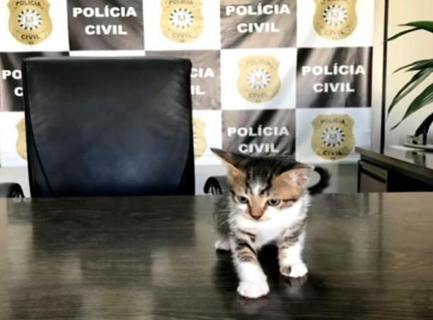 Polícia investiga homem que teria confessado adotar gatos e matá-los em Jóia