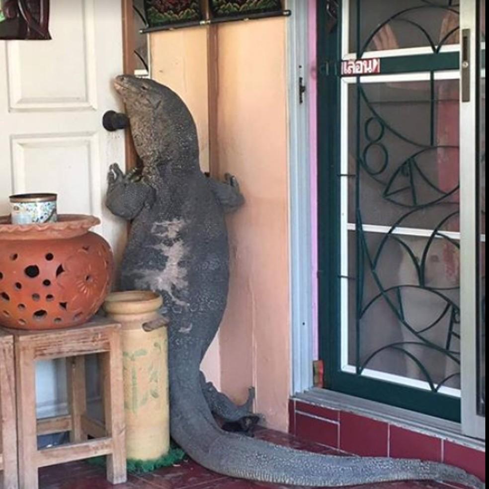 Família tailandesa levou um susto ao flagrar um lagarto enorme na porta de sua casa em Nonthaburi (Foto: Reprodução/Facebook/Attanai Thaiyuanwong)