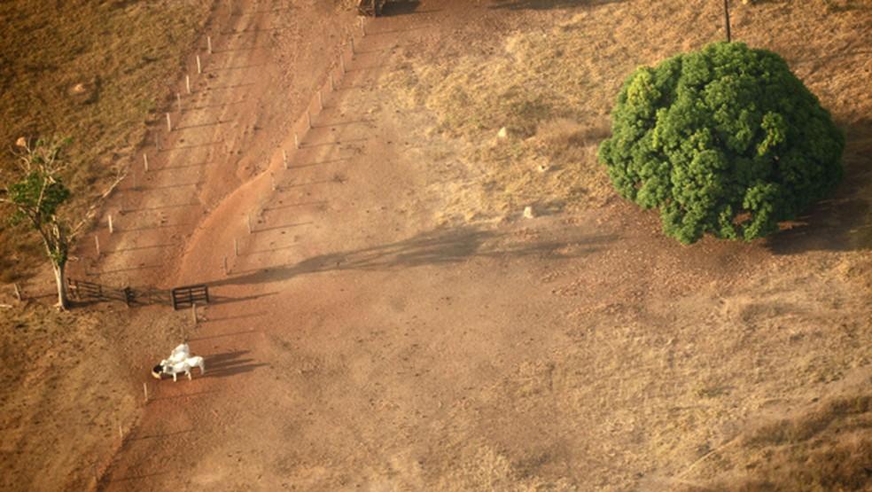 Redenção, cidade do Pará, perdeu grande parte da cobertura vegetal por conta da atividade pecuária.  — Foto: Paulo Whitaker/Reuters/Arquivo
