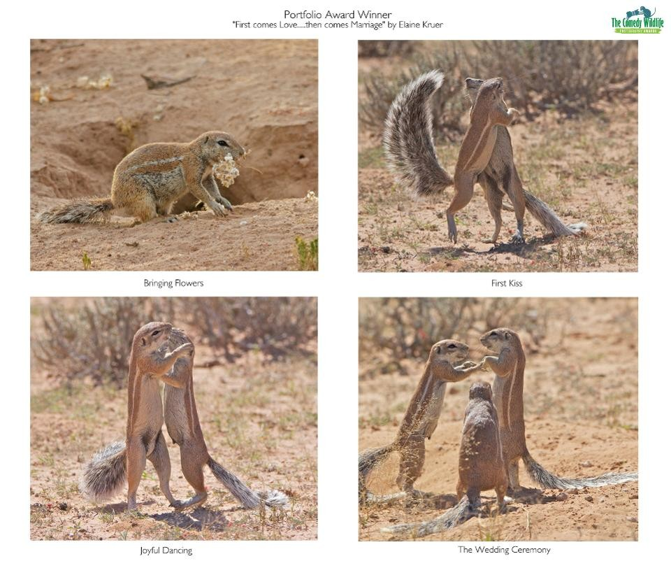 First comes love, then comes marriage (Photo: Reproduction Comedy Wildlife Photography Awards 2019)