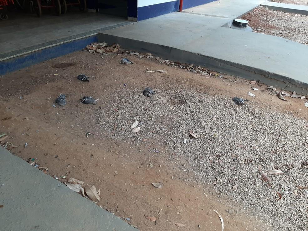 Por causa da morte dos pombos, aulas foram suspensas — Foto: Rafael Sousa/ Arquivo pessoal