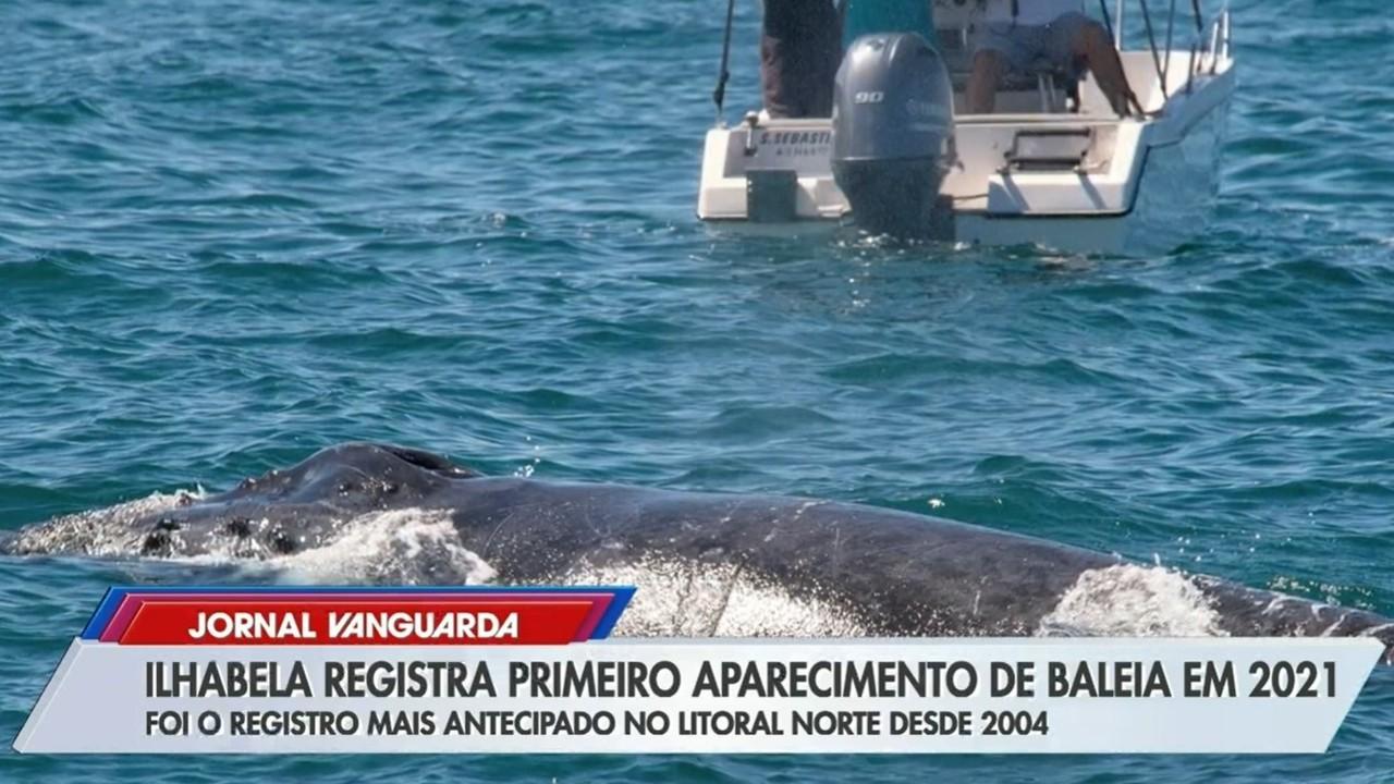 Baleia e tubarão são avistados em Ilhabela