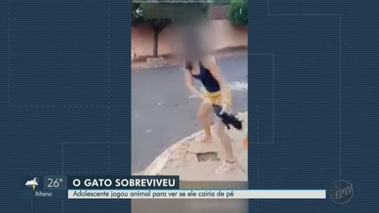 Gêmeas são suspeitas de maus-tratos ao arremessar gato do outro lado da rua em Ipuã; vídeo