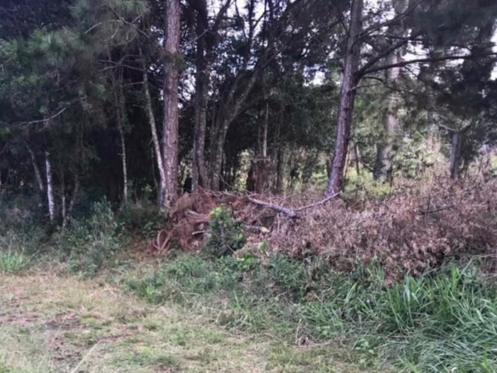 Corpo de Aline foi encontrado em matagal ao lado da Colônia Penal Agrícola, em Piraquara — Foto: Reprodução/RPC