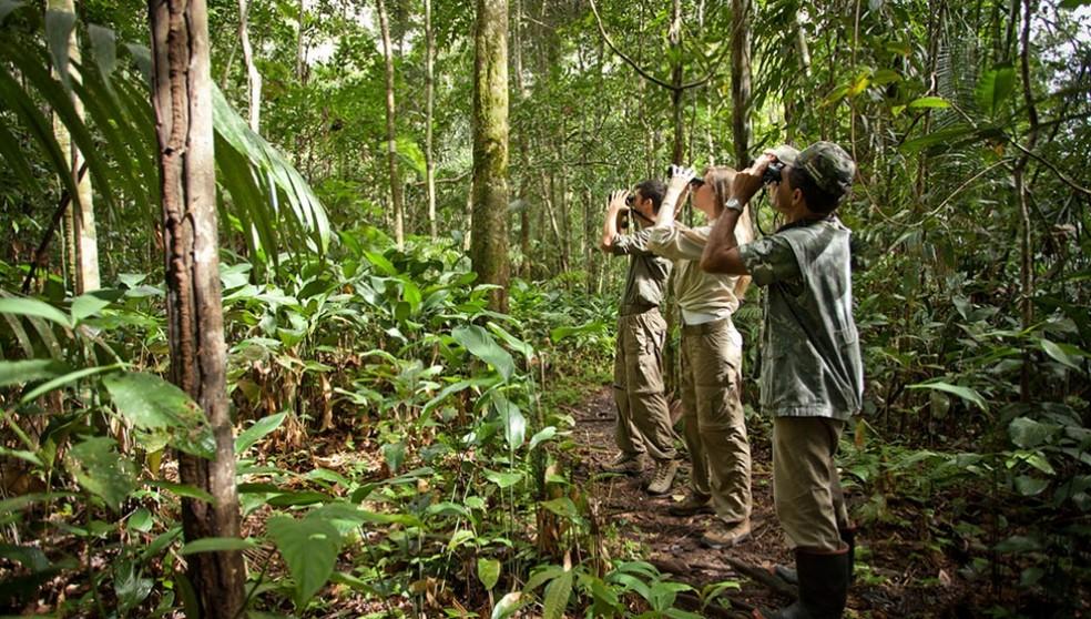 Observar aves na Amazônia é uma tarefa mais desafiadora do que em regiões de cerrado, pois muitas aves estão escondidas dentro da floresta e se movem com frequência — Foto: Samuel Melim/ Divulgação