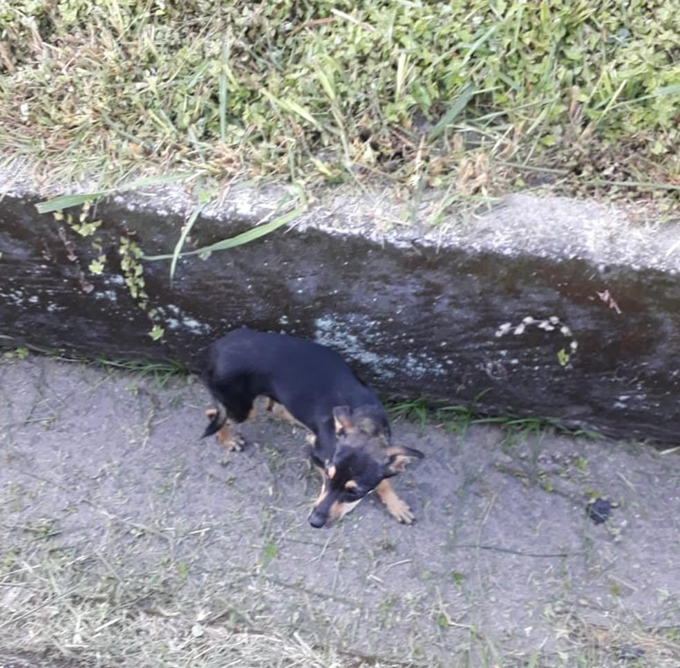 Animal não ficou ferido em acidente na Rio-Santos, em Angra dos Reis — Foto: Tobias Pencinato/Arquivo Pessoal