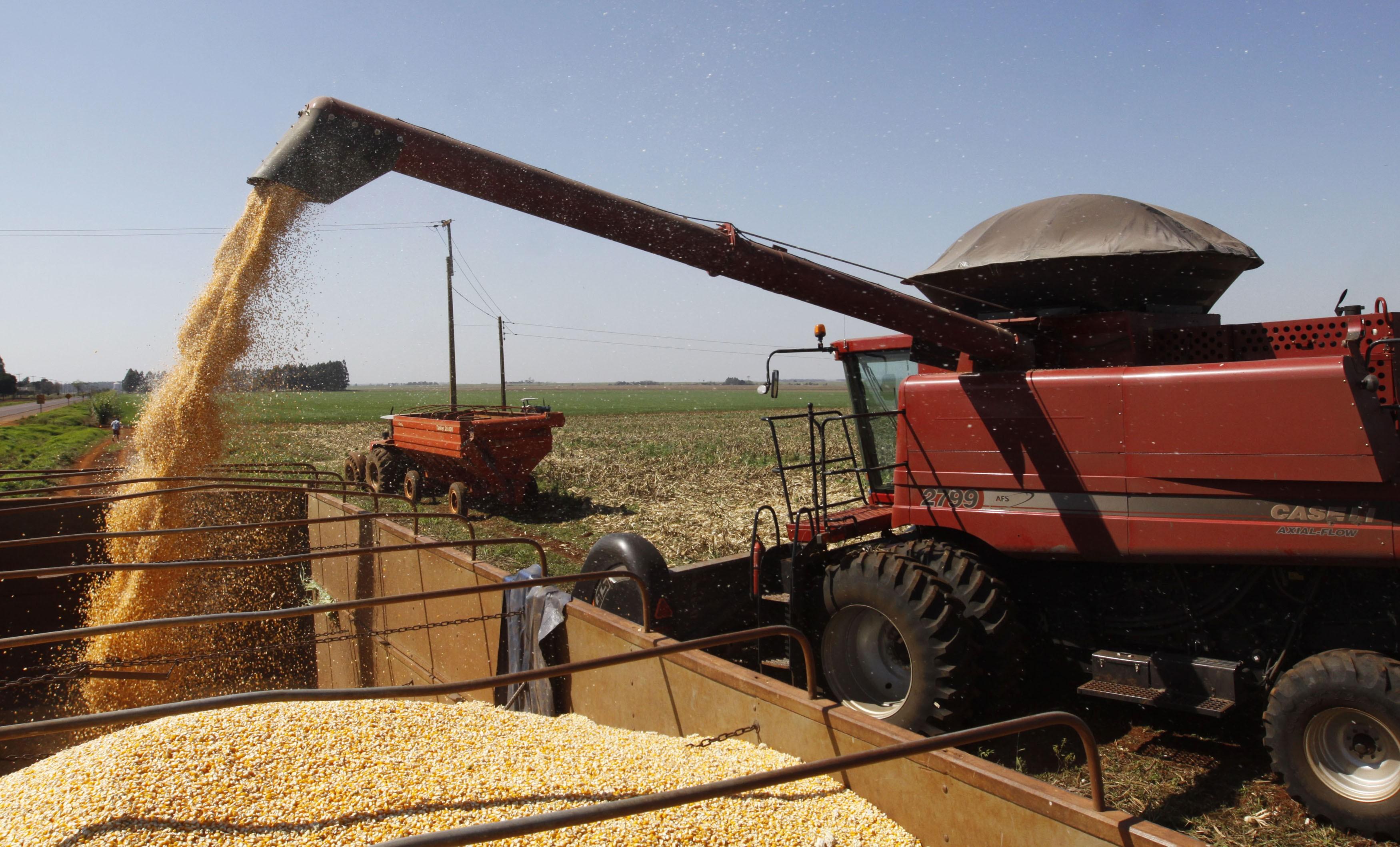 Carregamento de milho em caminhão no Paraguay. 07/08/2012  (Foto: REUTERS/Jorge Adorno)