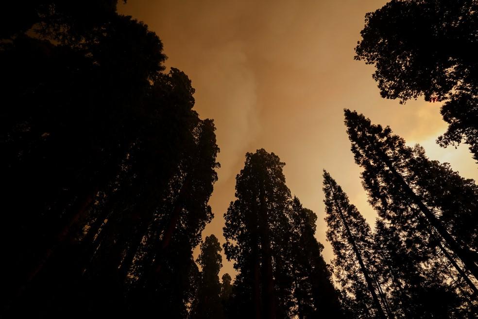 Incêndio atinge o Parque Nacional das Sequoias, nos Estados Unidos. — Foto: REUTERS/Fred Greaves