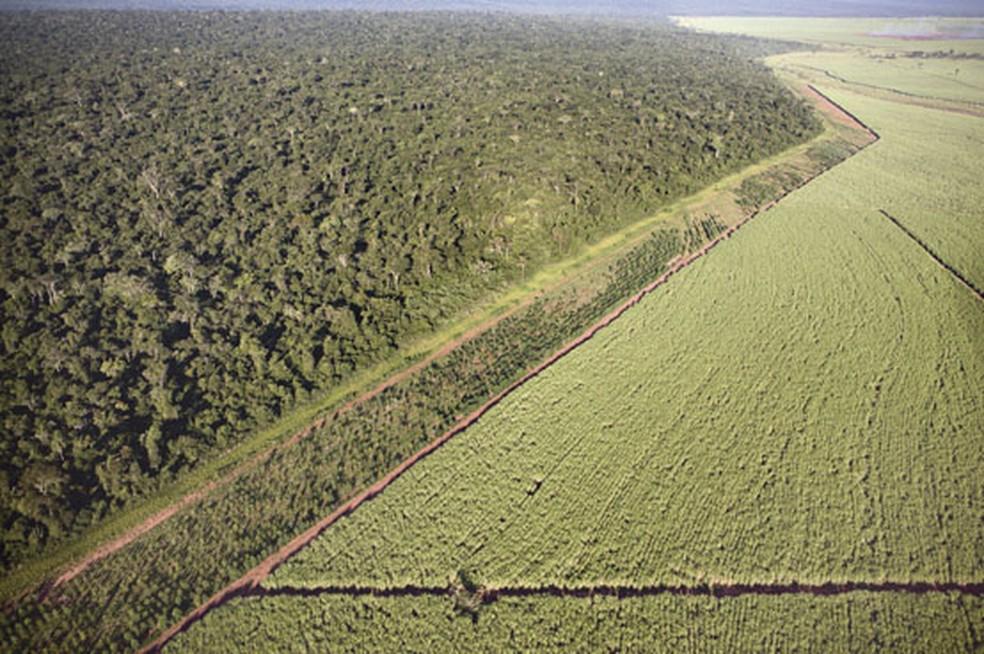 Pontal do Paranapanema abriga o maior remanescente de Mata Atlântica no Estado de SP — Foto: Divulgação/IPÊPrêmio Rolex 2004