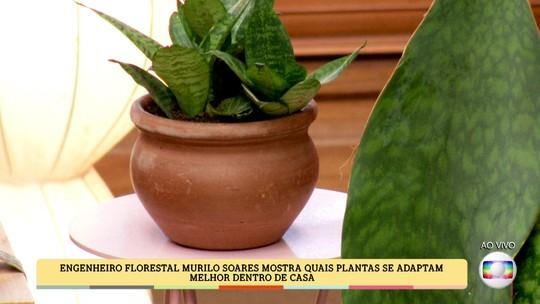Saiba quais plantas se adaptam melhor dentro de casa