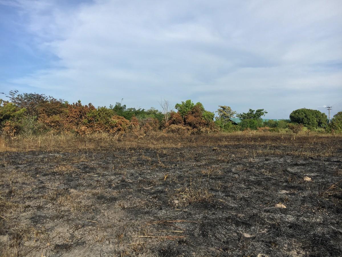 Fogo atinge área de lavrado dentro do Parque Anauá, em Boa Vista