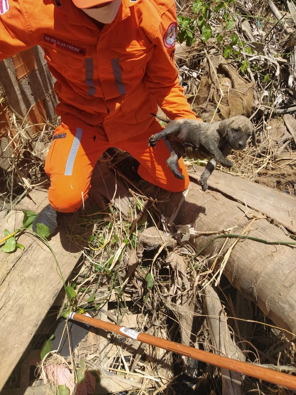 Filhote de cachorro é resgatado pelos bombeiros após cair em bueiro no oeste da Bahia