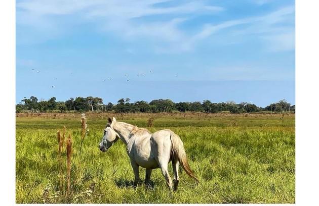 Renato voltou a andar a cavalo. Na novela 'Velho Chico', o ator já havia aprendido a prática (Foto: Reprodução)