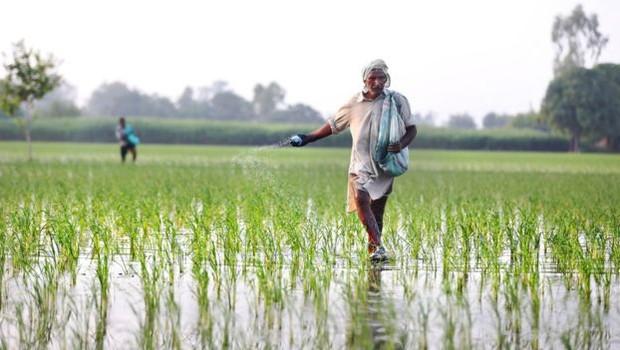 Na Índia, o aumento da vegetação é tributário principalmente da ampliação da agricultura; esta, no entanto, não contribui para a captura do carbono, como é o caso das florestas (Foto: Getty Images via BBC)
