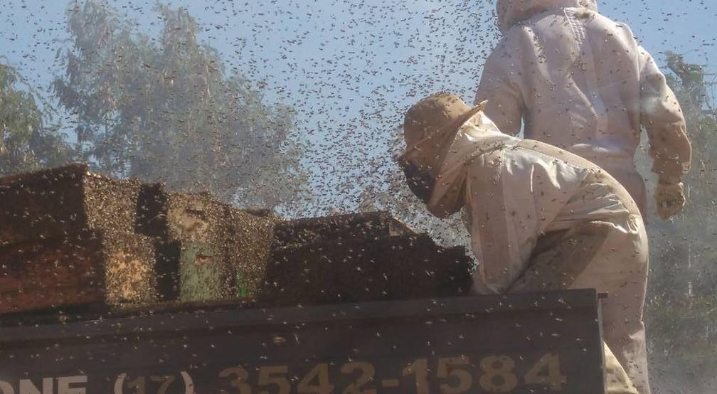 Mais de um milhão de abelhas ficaram soltas na rodovia em Urupês (Foto: Arquivo pessoal)