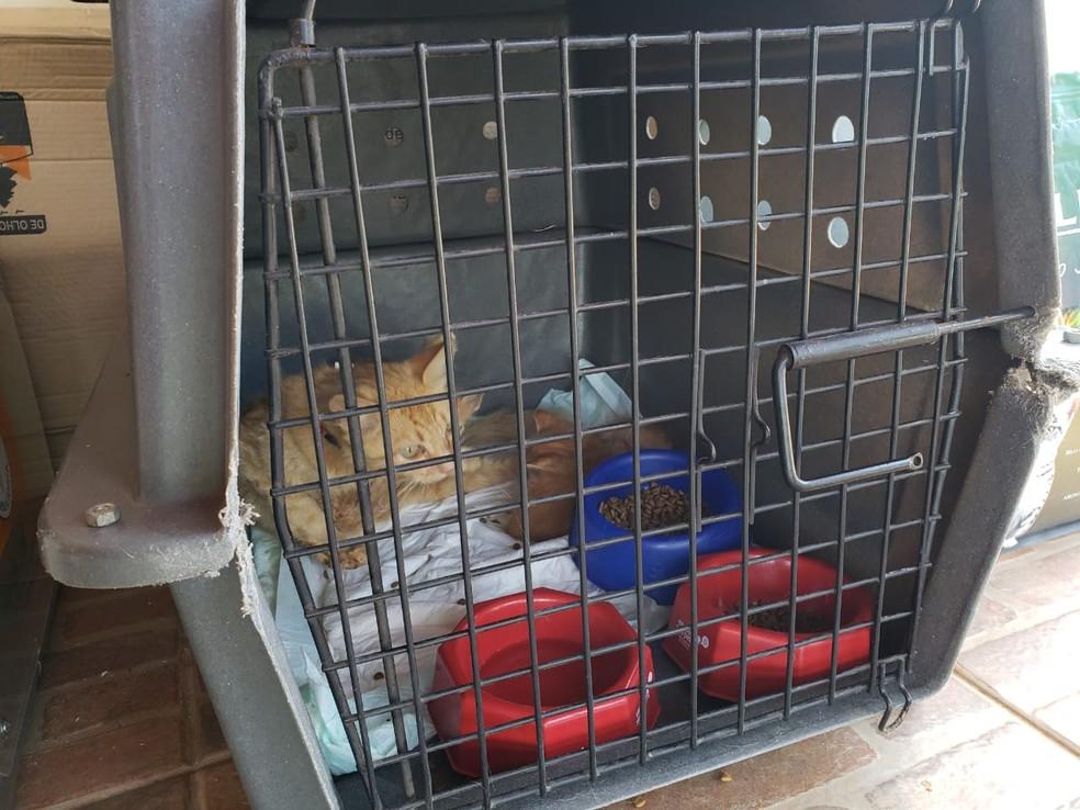 Filhotes de gatos descansam e recem alimentação após serem resgatados na lama da Vale — Foto: Nathália Caldas/TV Globo