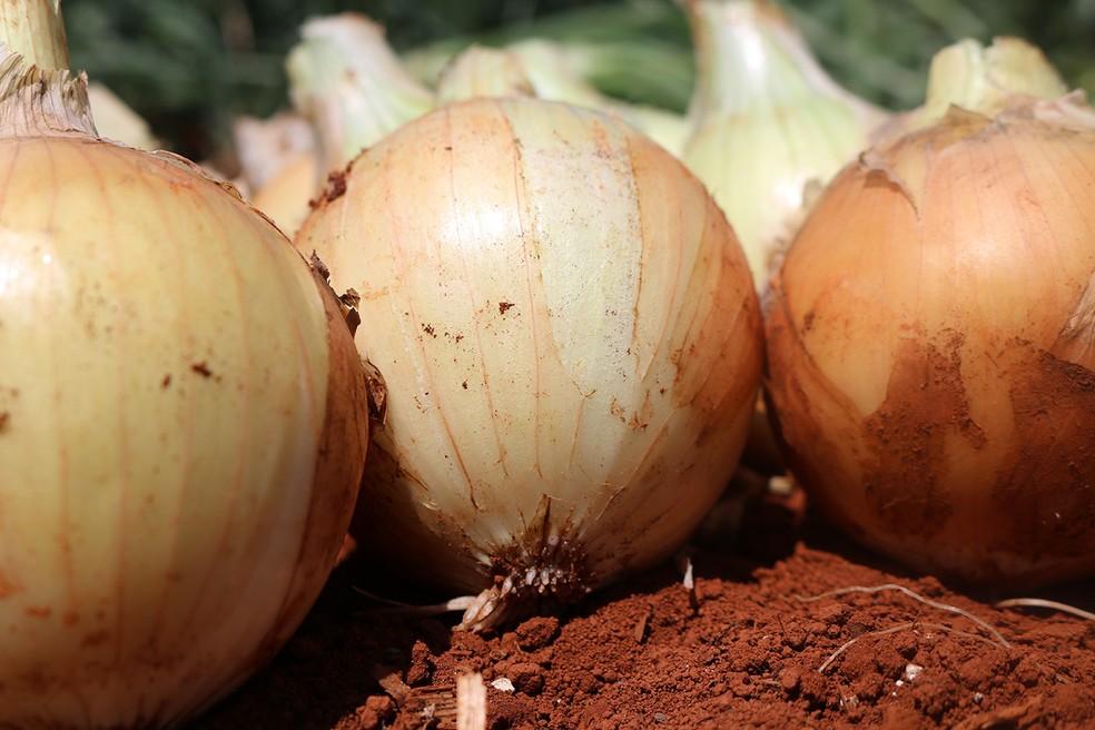 O brasileiro come 6 kg de cebola por ano, segundo Lenita Haber, analista da Embrapa.  — Foto: Quele Ribeiro Pereira