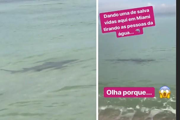 Tubarão em Miami assusta família de Vera Viel (Foto: Reprodução / Instagram)