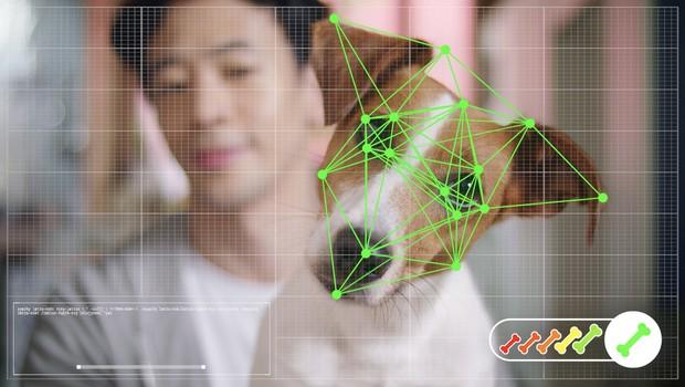 O software foi alimentado com mais de 20 mil imagens de cachorros de raça e vira-latas e consegue saber se o seu cão gostou ou não de um brinquedo (Foto: Divulgação)