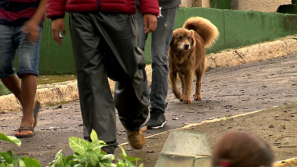 """Cachorro conhecido como """"Bob Coveiro"""" que mora em um cemitério após a morte de sua dona  — Foto: Reprodução/TV Globo"""