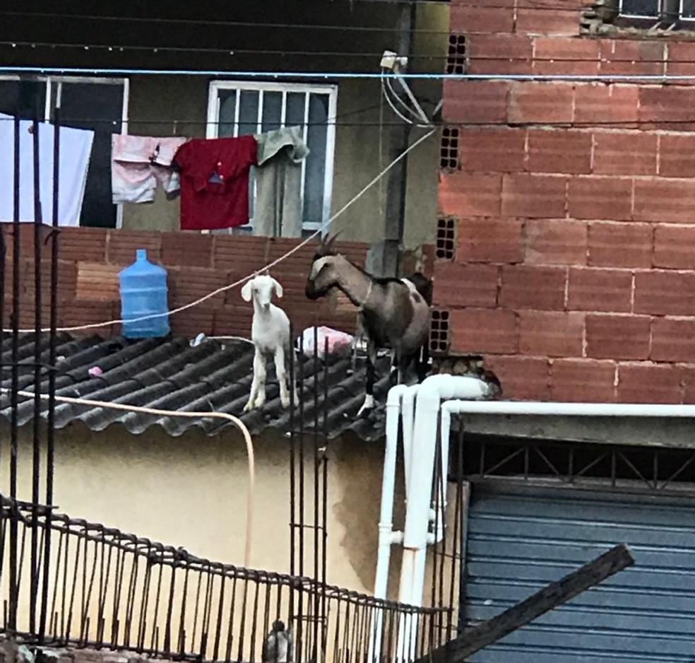 Bodes também foram colocados no telhado de casa em Guaratiba, na Zona Oeste do Rio de Janeiro — Foto: Diego Haidar/ TV Globo