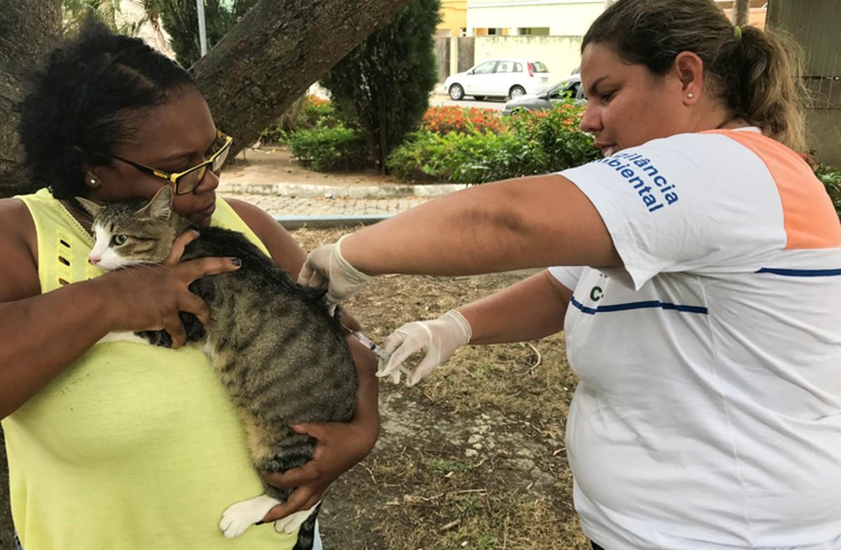 Bairro em Campos, RJ, recebe nova etapa da campanha de vacinação antirrábica