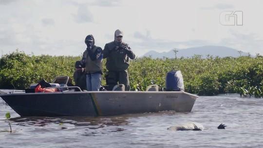 Pantanal tem um fiscal a cada 204 km² para combater crimes ambientais