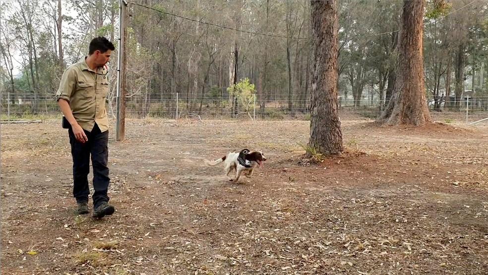 Cadela Taylor durante buscas por coalas em uma área de incêndio na Austrália. — Foto: Reuters