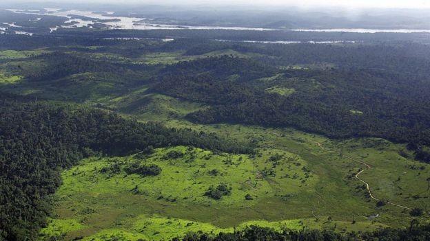 """Um relatório de 2016 descobriu que 85% das compensações de carbono tinham uma """"baixa probabilidade"""" de criar impactos reais (Foto: AFP via BBC News Brasil)"""
